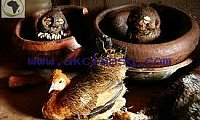 GREAT AFRICAN SANGOMA WITH POWERFUL SPELLS +27786650291