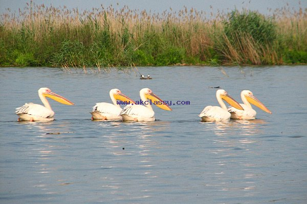 We sell investment company with 736 ha for tourism, aquaculture and agriculture in the Danube Delta