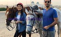 Lovely Arabian Horses For sale