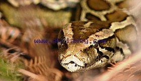 python_grid.jpg