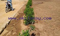 FARM HOUSES PLOTS Land on installments near DHA City & Bahria Town Karachi