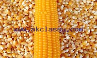 Order Non GMO Yellow maize online