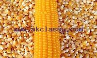 Where to order Non GMO Yellow maize
