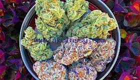 Buy marijuana & psychedelic magic mushroom online
