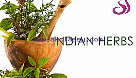 Best Indian Herbs Manufacturer and Supplier