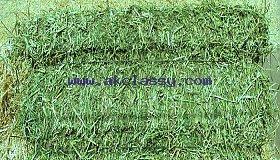 Quality Alfafa Hay for Animal Feeding Stuff Alfalfa / Alfalfa Hay/Whatsapp: +27621354579