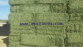 Harvest**** Alfalfa Hay / Timothy Alfafa Hay / Rhode Hay/Whatsapp: +27621354579