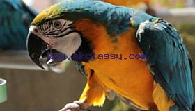 Adorable Macaw parrots looking for new homes. Do not hesitate to contact us if interested.