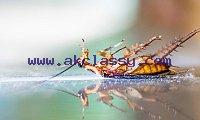 Golden Touch Pest Control L.L.C
