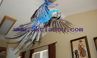 Hyacinth Macaw Parrots And Fresh Laid Fertile Eggs For Sale.