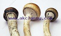 Buy weed online, magic mushrooms and Dankvapes  (Safe and discreet online Buy Marijuana, 100% guaranteed) What's App: +17202636108