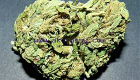 Buy weed online, magic mushrooms and Dankvapes