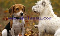 Get Affordable Pet Waste Removal Services In Lawrence