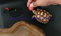 Different types of baby tortoise available for sale Contact for more details  Contact number ...(209) 783-8552