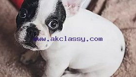 Certified pet acupuncture Singapore