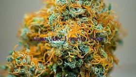 Buy your A+ marijuana weed online
