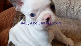 chunky-blue-boy-now-sold-5bd2427286995_grid.jpg