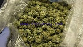 Quality medical cannabis and seed at affordable prices
