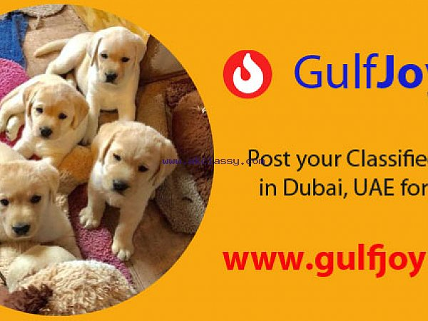 Get your pets for adoption online in DUBAI, UAE