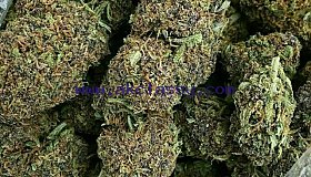 TOP SHELF MEDICAL MARIJUANA AND RAW CBD OIL TEXT/CALL ..+1(850-400-5107