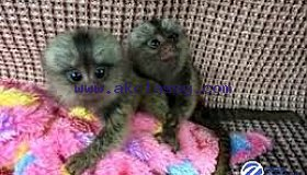 monkeys2_grid.jpg